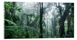 Acrylic print  Misty Rainforest, Costa Rica - Matteo Colombo