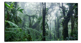Aluminium print  Misty Rainforest, Costa Rica - Matteo Colombo