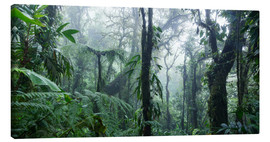 Canvas print  Misty Rainforest, Costa Rica - Matteo Colombo