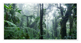 Premium poster Misty Rainforest, Costa Rica