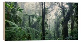 Wood print  Misty Rainforest, Costa Rica - Matteo Colombo