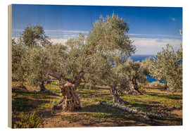 Wood print  Ancient olive trees in Mallorca (Spain) - Christian Müringer