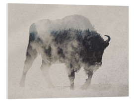 Acrylic print  Bison in the fog - Andreas Lie
