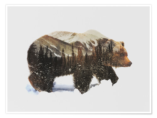 Premium poster Arctic grizzly bear