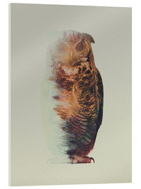 Acrylic print  Norwegian Woods The Owl - Andreas Lie