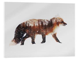 Acrylic glass  Arctic Red Fox - Andreas Lie