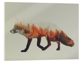 Acrylic glass  Norwegian Woods The Fox - Andreas Lie