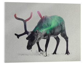 Acrylic print  reindeer in the aurora borealis - Andreas Lie