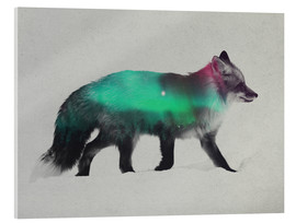 Acrylic glass  Fox In The Aurora Borealis - Andreas Lie