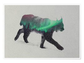 Premium poster  Lynx in the aurora borealis - Andreas Lie