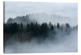 Canvas print  Fog in the forest - Sebastian Jakob