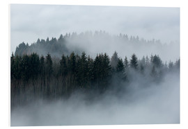 Foam board print  Fog in the forest - Sebastian Jakob