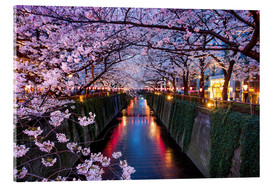 Acrylic glass  Pink cherry blossoms in Tokyo Japan - Jan Christopher Becke