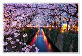Premium poster  Pink cherry blossoms in Tokyo Japan - Jan Christopher Becke