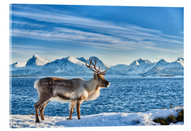 Acrylic print  Reindeer in snow covered landscape at sea - Jürgen Ritterbach