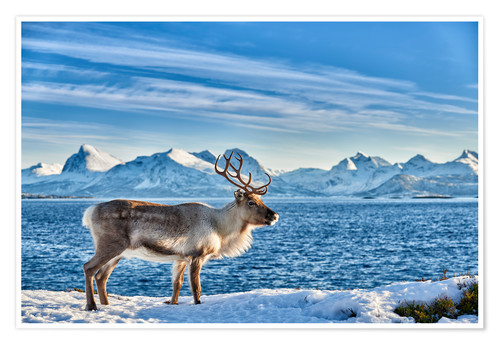 Premium poster Reindeer in snow covered landscape at sea