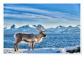 Premium poster  Reindeer in snow covered landscape at sea - Jürgen Ritterbach