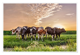 Premium poster  beautiful sunset cows gathering - Remco Gielen