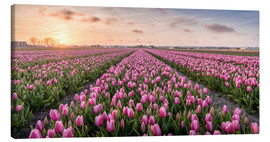 Canvas print  tulips fields holland - Remco Gielen