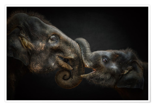 Premium poster Tenderness Asian Elephants