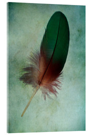 Acrylic print  Green feather - Jaroslaw Blaminsky