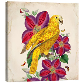 Canvas  Oh My Parrot V - Mandy Reinmuth