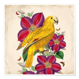 Premium poster  Oh My Parrot V - Mandy Reinmuth