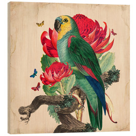 Wood print  Oh My Parrot X - Mandy Reinmuth
