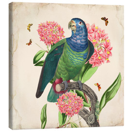 Canvas print  OhMyParrot IV - Mandy Reinmuth