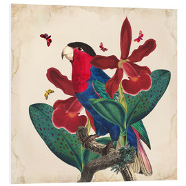 Foam board print  Oh My Parrot VII - Mandy Reinmuth