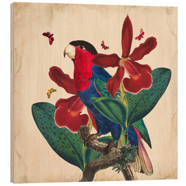 Wood print  Oh My Parrot VII - Mandy Reinmuth