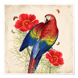 Premium poster Oh My Parrot III