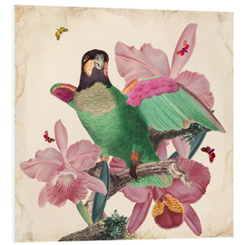 Foam board print  Oh my parrot VIII - Mandy Reinmuth