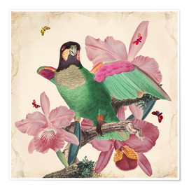 Poster  Oh My Parrot VIII - Mandy Reinmuth