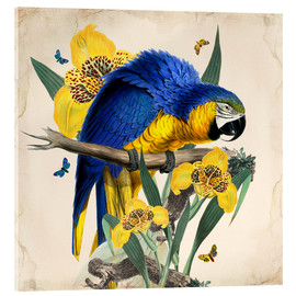 Acrylic glass  Oh My Parrot IX - Mandy Reinmuth