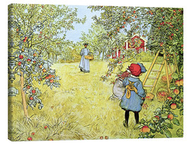 Canvas print  The Apple Harvest - Carl Larsson