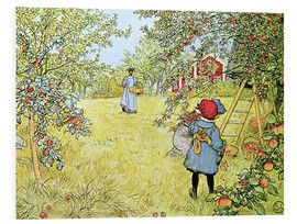 Foam board print  The Apple Harvest - Carl Larsson