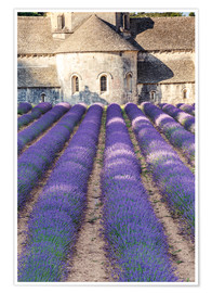 Premium poster Lavender field and famous Senanque abbey in Provence, France