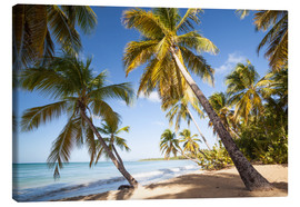 Canvas print  Palm trees and sandy beach in the caribbean, Martinique, France - Matteo Colombo