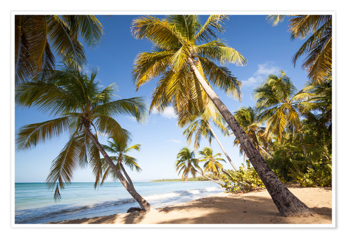 Premium poster Palm trees and sandy beach in the caribbean, Martinique, France