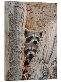 Wood print  Young raccoons in hiding - Elizabeth Boehm