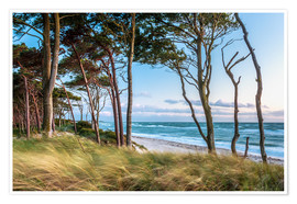 Premium poster Coastal Forest and Beach at the Baltic Sea