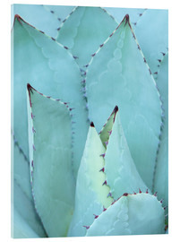 Acrylic glass  agave