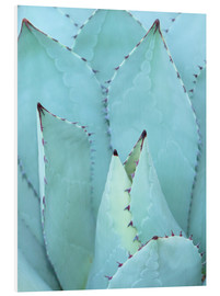 Forex  agave