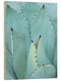 Wood  agave