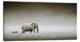Canvas print  Elephant and zebra - Johan Swanepoel