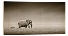 Wood print  Elephant and zebra - Johan Swanepoel