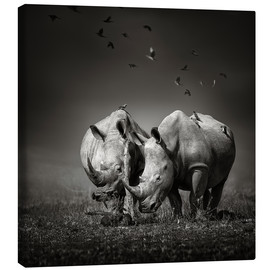 Canvas print  Two Rhinoceros with Birds - Johan Swanepoel