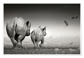 Premium poster Rhinoceros cow and calf walking away together