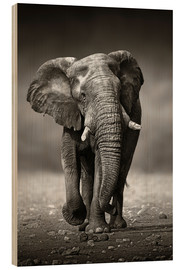 Wood  Elephant bull approaching from the front - Johan Swanepoel